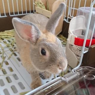 ミニウサギの男の子