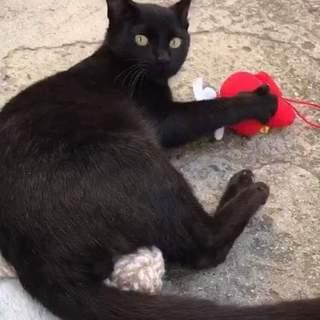 黒猫さんは福の象徴ですよ♪