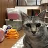 水谷CATクラブ(保護活動者)