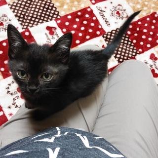 K22 人懐っこい黒猫ちゃん