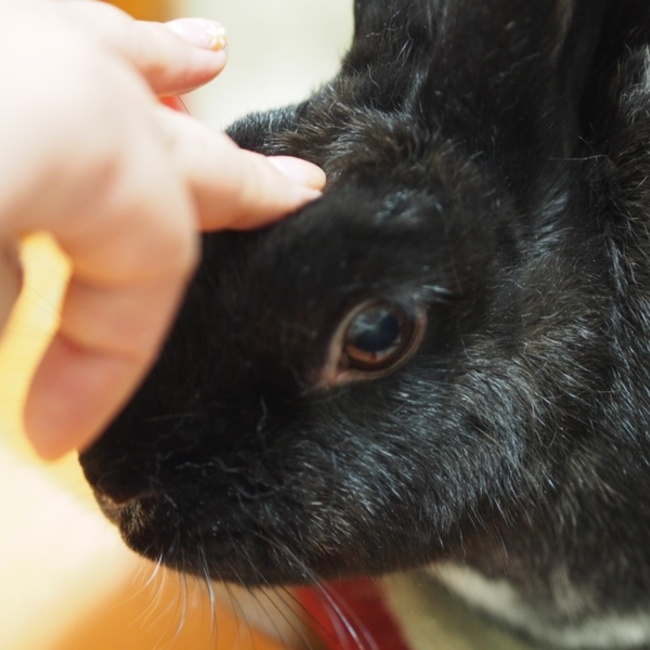 ウサギデザインのカバー写真