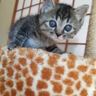 カワウソみたいな子猫