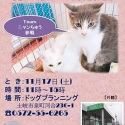 保護猫 譲渡会