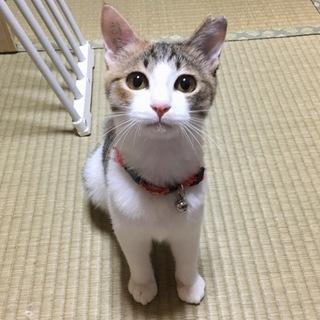 京都より美人姉妹 三毛猫ツナちゃん♪