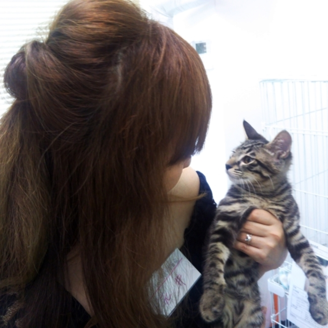 猫まみれ実行委員会のカバー写真