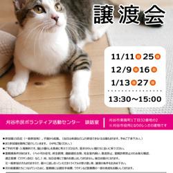 刈谷市で開催!! 猫の譲渡会