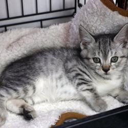 三重県桑名市11月18日(日)第85回リトルパウエイド猫の譲渡会
