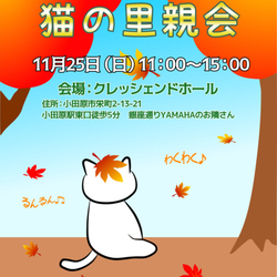 猫の里親会☆小田原