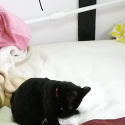 どこでも寝ますよ猫ですもの