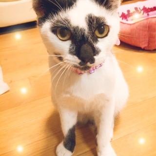 約7ヶ月 かぶき美猫 ☆ひめちゃん☆