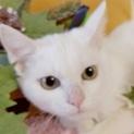 11/18幕張メッセ★レイちゃん★ゴロゴロ白猫さん