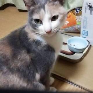 綺麗な色の三毛猫ちゃん