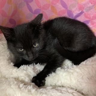 黒猫!2〜3ヶ月!男子!