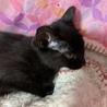 黒猫!2〜3ヶ月!男子! サムネイル2