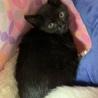 黒猫!2〜3ヶ月!男子! サムネイル6