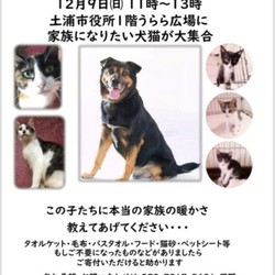 犬猫譲渡会~ノアの方舟