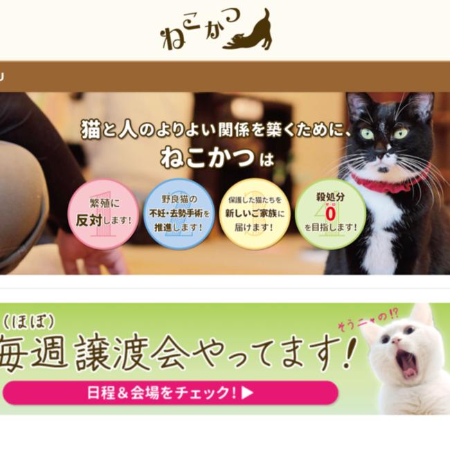 保護猫カフェ ねこかつのカバー写真