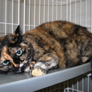 サビ猫16歳☆穏やかな余生を過ごさせてください!