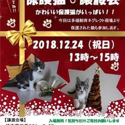 クリスマス 猫カフェ風保護猫譲渡会