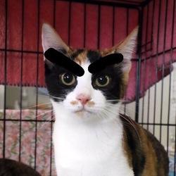 保護猫の熱田譲渡会