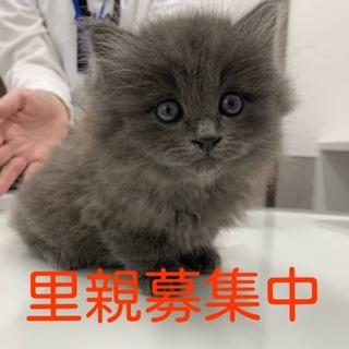 長毛のふわふわモコモコ子猫3匹