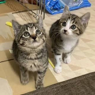 兄妹一緒のお家を探しています!!
