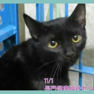 可愛い黒猫ちゃん 助けて下さい