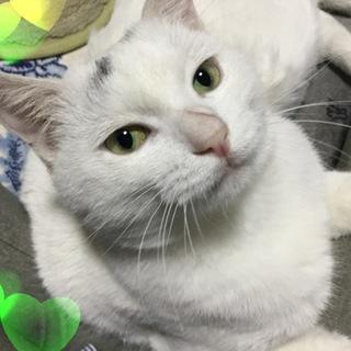桜猫の白猫さん里親さん募集中♪