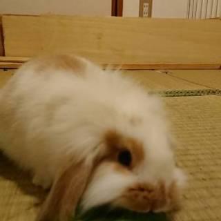 赤ちゃんウサギの里親募集です★