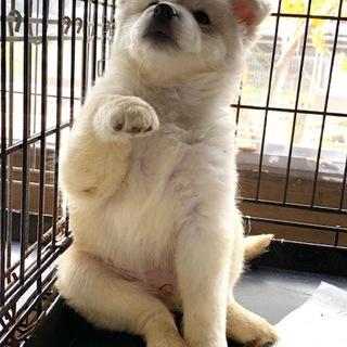 ♡685 可愛い子犬です。
