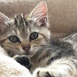 猫の譲渡会−*縁会(えんかい)*ー
