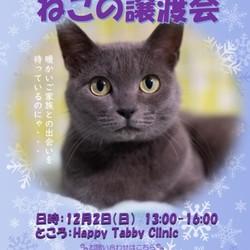 第2回HappyTabbyClinic猫の譲渡会