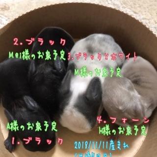 2018年11月11日生まれ♡うさちゃん♡