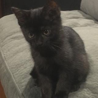 子猫4匹の里親を探しています。