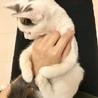 生後4ヶ月の子猫ちゃん