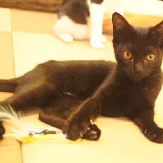 P21 黒猫の女の子