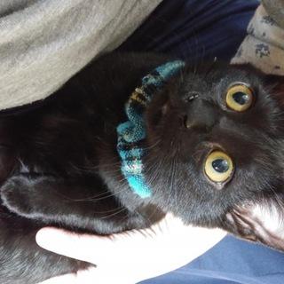 K21 丸顔の黒猫くん (仮名 クリリン)