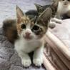 生後1ヵ月ぐらいの子猫