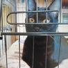 黒猫ちゃん元気いっぱいな人懐こい女の子