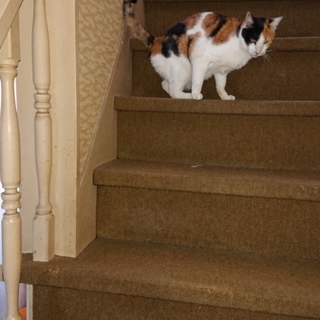 高齢夫婦2人で飼う猫たちの里親様を探しています
