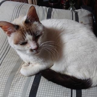高齢夫婦が飼育する猫たちの里親様を探しています
