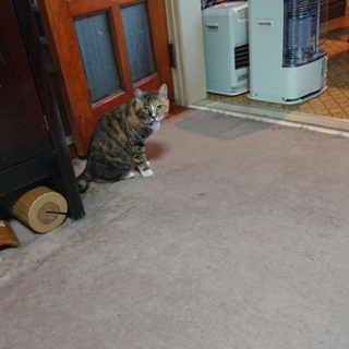 高齢の夫婦が飼育する猫たちの里親様を探しています