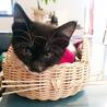 マスクのお顔が魅力的な、黒白猫さん サムネイル4