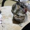 子猫が生まれてから4箇月が経ちました