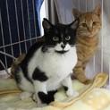 名古屋から黒白猫のブッチー