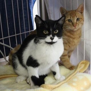 名古屋から黒白猫のはなちゃん