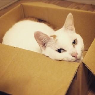 ナデナデ大好き!まったり猫