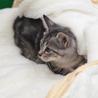 譲渡対象猫紹介