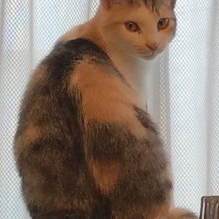 三毛猫の女の子♪