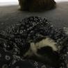 子猫の強制給餌